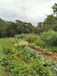 dad's-garden