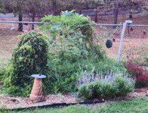 1-garden-shot