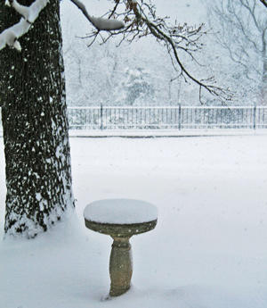 bird-bath-snow-storm-web
