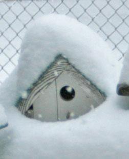 snowed in bird house