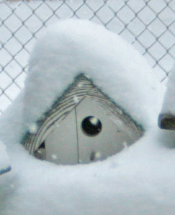 snowed in bird house