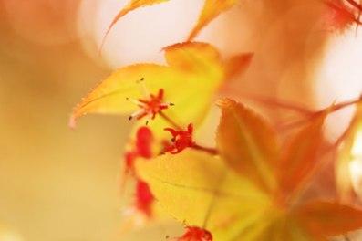1-1-1-leaves