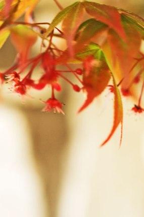 1-1-flowers