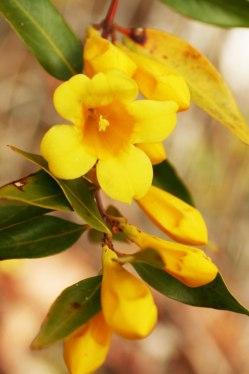 1-1-jasmine