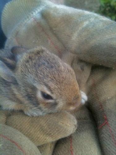 bunny-gloves
