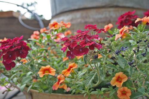 deck-flowers