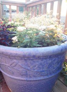 Big pots take a lot of soil!