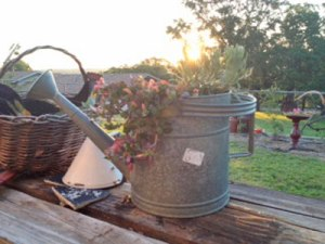 I have a thing for watering cans.