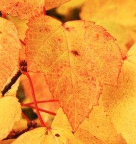 need-this-leaf