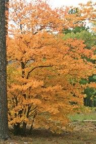 need-this-tree
