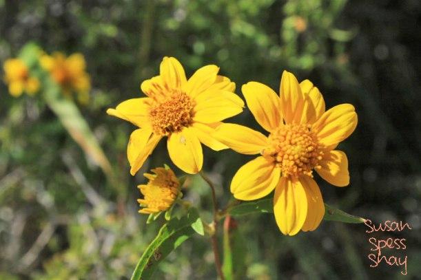 mv-flowers